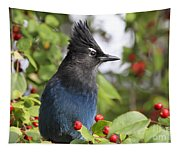 Steller's Jay And Red Berries Tapestry