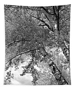 Storm Over The Cottonwood Trees - Black And White Tapestry