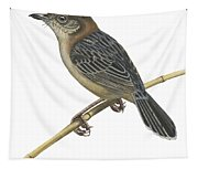 Stout Cisticola Tapestry