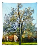 Suburbs - Late Afternoon In Spring Tapestry