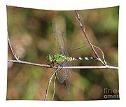 Summer Pondhawk Dragonfly Tapestry