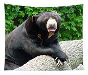 Sun Bear - 09515-1 Tapestry
