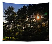 Sun Burst Through The Trees Tapestry