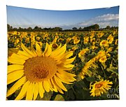 Sunflowers At Dawn Tapestry