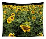 Sunflowers Panorama Tapestry