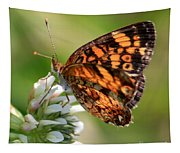 Sunlight Through Butterfly Wings Tapestry