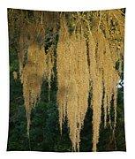 Sunlit Spanish Moss Tapestry