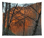 Sunset Through The Forest Tapestry