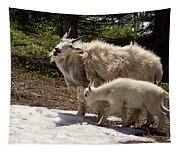 Sweet Mama Goat Tapestry