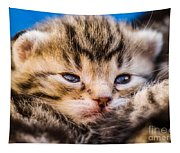 Sweet Small Kitten  Tapestry