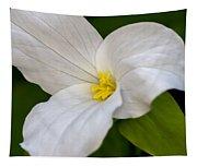 Sweet White Trillium 5 Tapestry
