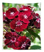 Sweet William Named Sooty Tapestry