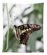 Tailed Jay Butterfly Tapestry