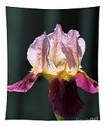 Tall Bearded Iris Named Indian Chief Tapestry