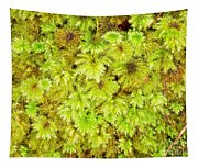 Tender Fresh Green Moss Background Texture Pattern Tapestry