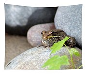 The Bronze Frog Tapestry