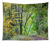 The Dense Forest Tapestry