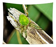 The Green Spider Tapestry
