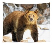The Grizzly Strut Tapestry