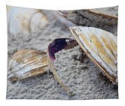 Shells In The Sand Tapestry