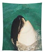 The Original Shamu Orca Whale At Sea World San Diego California 1967 Tapestry