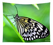 The Paper Kite Or Rice Paper Or Large Tree Nymph Butterfly Also Known As Idea Leuconoe Tapestry
