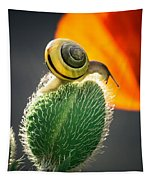 The Poppy And The Snail Tapestry