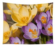 The Purple And Yellow Crocus Flowers Tapestry