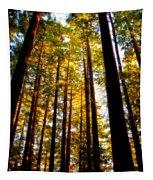 The Redwoods Of Florence Keller Park Tapestry