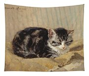 The Tabby Tapestry