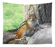 The Watching Chipmunk Reclines Tapestry
