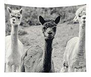 Three Alpaca Friends Tapestry