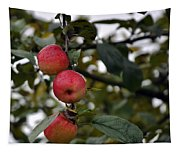 Three Apples Tapestry