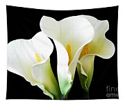 Three Calla Lilies On Black Tapestry