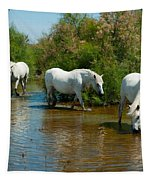 Three Camargue White Horses In A Lagoon Tapestry by Panoramic Images
