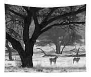 Three Cheetahs Tapestry