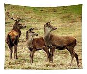 Wildlife Three Red Deer Tapestry