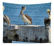 Three Pelicans Tapestry