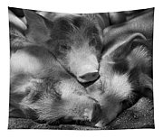 Three Piglets Sleeping Against Each Tapestry