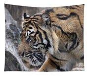 Sumatran Tiger-5418 Tapestry