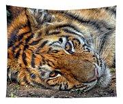Tiger Nap Time Tapestry