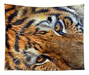 Tiger Peepers Tapestry