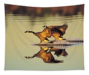Tk0157, Thomas Kitchin Canada Geese Tapestry