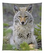 Tk0607, Thomas Kitchin Coyote In Spring Tapestry