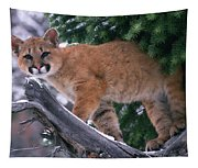 T.kitchin 15274d, Cougar Kitten Tapestry