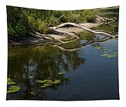 Toronto Islands Slow Cruising   Tapestry