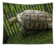 Tortoise Turtle Time Tapestry