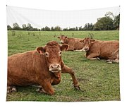 Tough Cows Tapestry