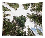 Towering Pine Trees Tapestry