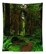 Trail Into The Forest Tapestry